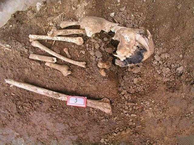 شرطة جنوب إفريقيا تصادر 12 صندوقًا من عظام الأسود