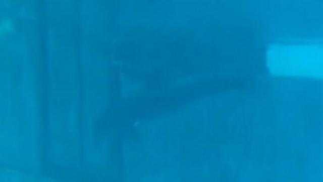 """فيديو صادم.. دولفين يضرب رأسه في زجاج """"حوض أسماك"""""""