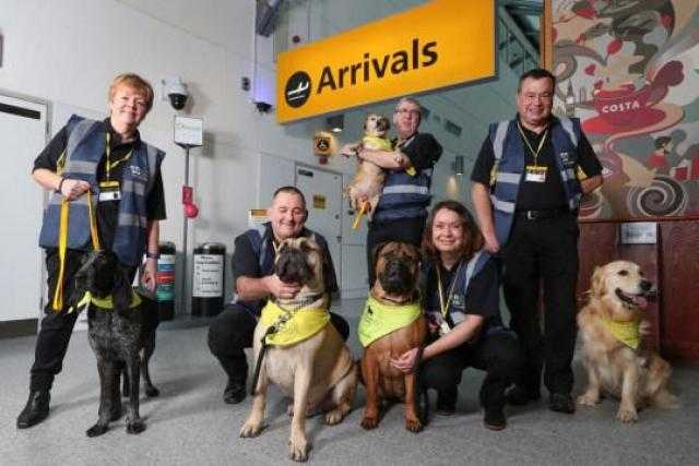 ميرور: الكلاب تخفف توتر المسافرين في مطار بريطاني