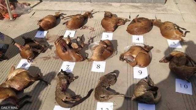 """""""سبب كورونا المحتمل"""".. تهريب الحيوانات النافقة مستمر في الصين"""