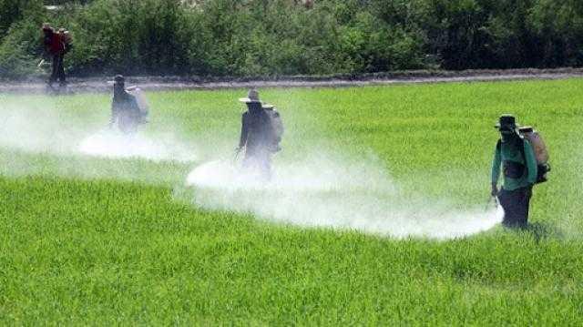 مفاجأة .. المبيدات الحشرية لا تسبب السرطان