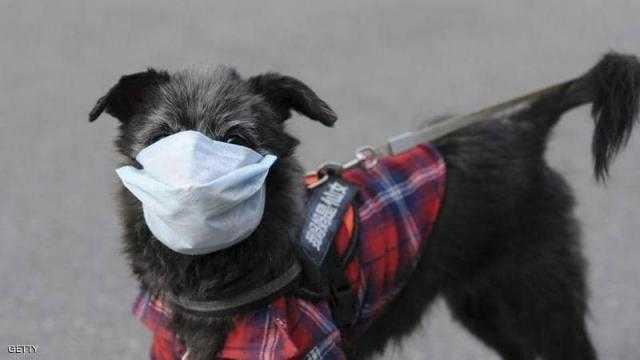 إصابة كلب بـ فيروس كورونا في الصين