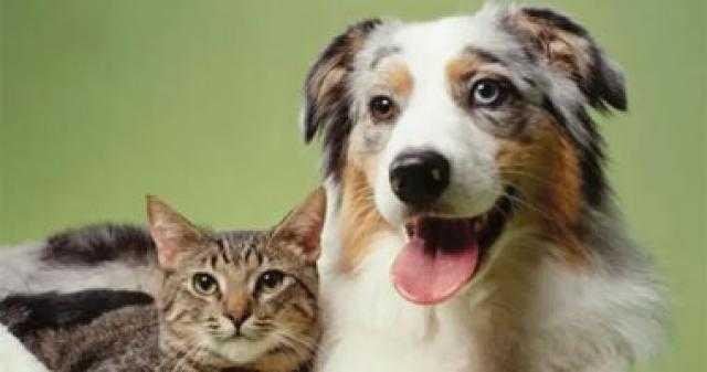 حماية الحيوان: لا يجوز شراء أو بيع الكلاب