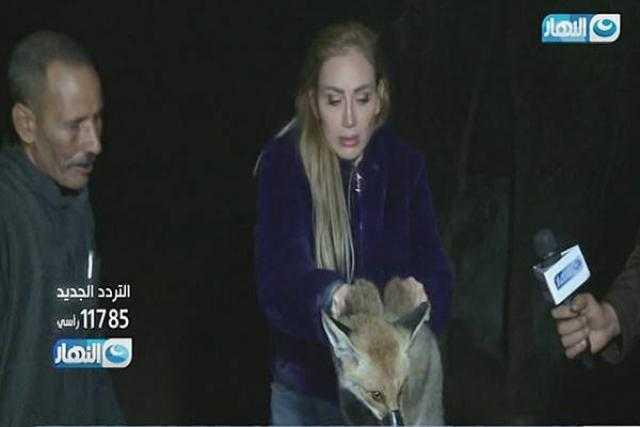 غضب السوشيال.. قصة الثعلب الذي يهدد برنامج ريهام سعيد بالإيقاف