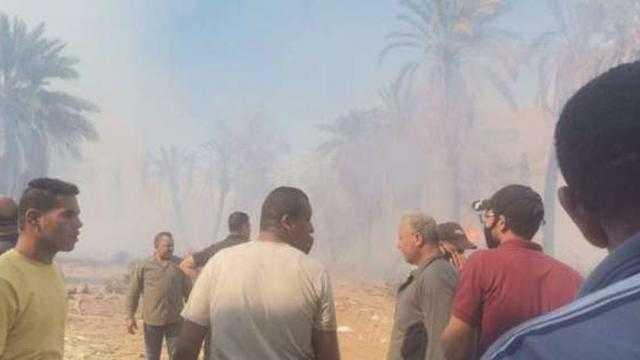 النار داخلة على البيوت.. حريق هائل في زراعات النخيل في الوادي الجديد