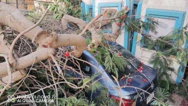 عاجل.. سقوط شجرة بساحة الجبلاية وحي غرب القاهرة يتعامل معها