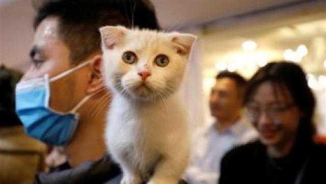 دراسة: القطط قد ترفع خطر الإصابة بمرض الذهان