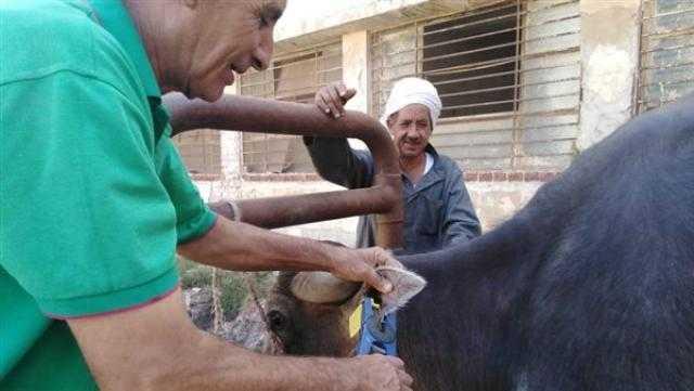 الغربية: الكشف على 981 رأس ماشية بقافلة بيطرية في قرية الهياتم