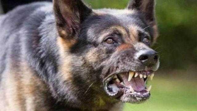 عاجل.. إصابة 37 شخصا عقرهم كلب مسعور غرب الإسكندرية