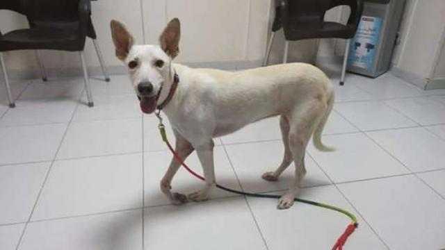 «عض37 شخصاً».. حملات لتمشيط غرب الإسكندرية بحثا عن كلب مسعور