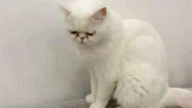 عاجل.. الإفتاء الحالة الوحيدة الجائز فيها للتخلص من القطط