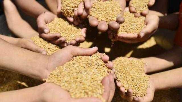«التموين»: استهلاك الفرد من القمح عالميا 72 كيلو وفي مصر 182