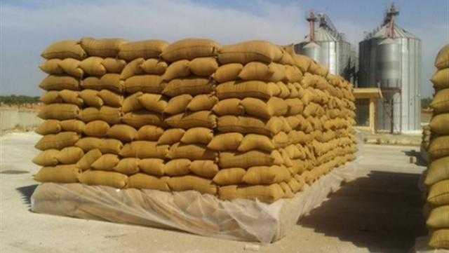 الحكومة تنفي وجود أزمة في توفير القمح بالمحافظات